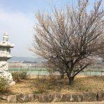 太陽の塔桜ヶ丘さんの合同供養祭に参加しました